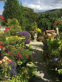 "My garden ""Margeritten"" late August 2017 - IJ on My own garden ""Margeritten"""
