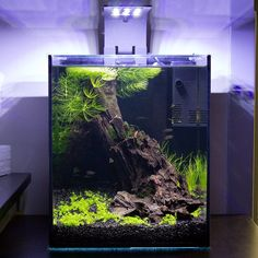 Planted EcoPico after 6 months growth. For more info & pics on this tank visit build thread here: http://scapeclub.org/forum/showthread.php?t=14414
