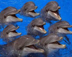 dauphins   dauphins