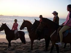 Horseriding at Oliphantskop Horse Trials in Langebaan offers rides over the highest Koppie in Langebaan to explore the Fauna & Flora.  Also have the opportunity to see Black Eagles soaring over the old Granite Quarries in the Langebaan Bird Reserve. We offer 1 hr rides in Langebaan for beginner and advanced riders of all ages at R180 - R200 p/p. Rides depart daily at the following times: 09:30, 11:00, 14:30 & 16:00. Bookings are essential: +27 (0) 22 772 2326 or email… Provinces Of South Africa, Cape Town, West Coast, Westerns, Opportunity, National Parks, Old Things, Horses, Explore