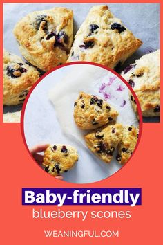 This kid friendly scones recipe is great for introducing solids and starting baby led weaning too. You can have them for breakfast, lunch or dinner, or a quick snack on the go. They have no sugar and are nutritious and healthy for the whole family. Fun Snacks For Kids, Healthy Meals For Kids, Easy Healthy Recipes, Baby Food Recipes, Baby Meals, Kid Meals, Meals For One, Baby First Foods, Baby Finger Foods