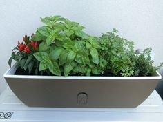 Small herb garden for terrace Small Herb Gardens, Terrace, Planter Pots, Herbs, Foods, Red, Porch, Food Food, Patio