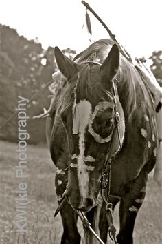 Lakota Native American Horse KWilkie Photogrpahy