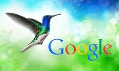Google Hummingbird Colibri : mise à jour - my-web-site.eu