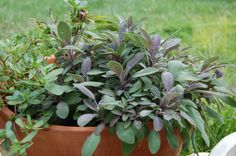 Grow your own herbs at home. It's easy, saves you money, and gives you lots of delicious healthy flavor!