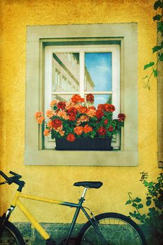 bike, flowers