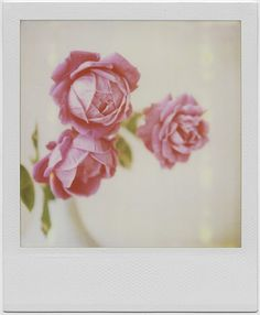 // polaroid by Elinor A. Scott