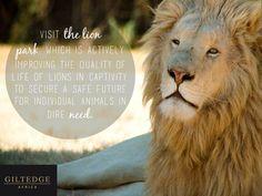 Cape Winelands   Lion Park