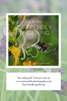 garden Photography Friends - Save the Bees!