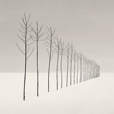 slenders--looks like a Michael Kenna photo. ??