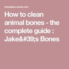 How to clean animal bones - the complete guide         : Jake's Bones