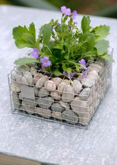 Wire Cube Planter with Pebbles
