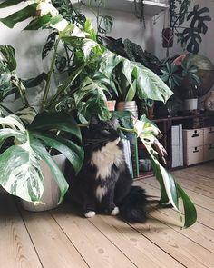 #plantsandcats