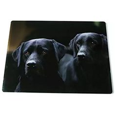 Black Labradors glass kitchen worktop surface protector. Iconic photographic image by Charles Sainsbury-Plaice. Christmas and birthday gift ideas for dog lovers. Made in Great Britain. affiliate link