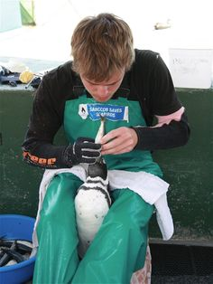 As well as learning about the life-cycle and conservation of the African Penguin, which is an endangered species, you will also be very 'hands - on' as you are taught how to catch, hold, feed and tube feed a variety of seabirds.