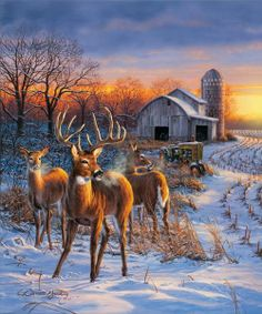 """""""Winter Whitetails"""" by Darrell Bush"""