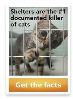Shelters are the #1 killer of cats in Australia - did you know that?  If not, there's probably a LOT more you should know...