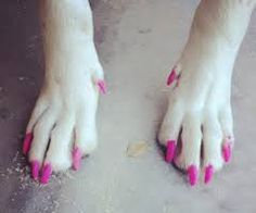 pawdicure nail art animali