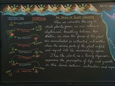 Waldorf 5th grade - botany chalkboard and contraction/expansion lesson