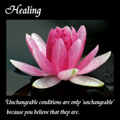 The flower of Healing.
