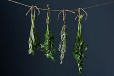 TOP 10 Inventive Ways to Preserve Herbs