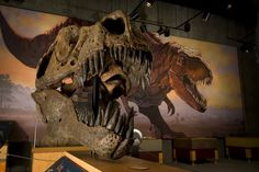 """""""Scotty"""" the T.rex, found near Eastend, is the most complete T.rex skeleton ever found in Canada. Tourism Saskatchewan, Saskatchewan Canada, Canadian Prairies, I Am Canadian, O Canada, Tyrannosaurus Rex, The Province, Travel Information, Lion Sculpture"""