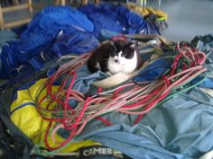 Katze auf dem Stoff eines Heißluftballons Mystery, Maine Coon Cats, Arts And Crafts, Cats