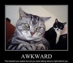 LOLCats - Awkward moment