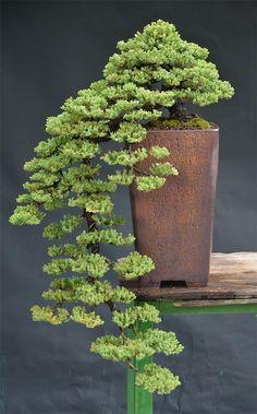 bonsai, árvore, arte