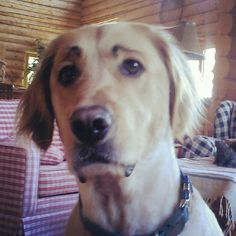 #67, Things to do when kids get bored this summer:  Draw eyebrows on the dog and ask him questions...Out?  Walk?  Squirrel? Go?