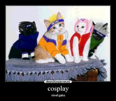 gatos cosplay , Buscar con Google