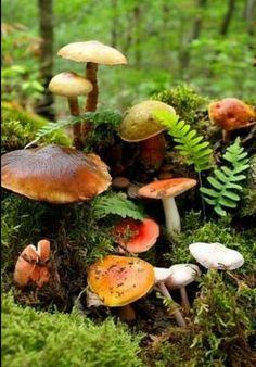 autumnal mushrooms