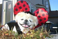 Animals - 12 Funny Dog Costumes | Reader's Digest