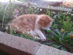 I walked outside to find this little shit taking a nap and eating flowers