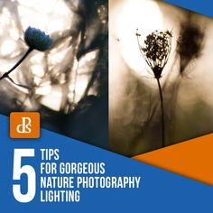 Discover the secrets to amazing nature photography lighting. Five tips to capture photos that will enhance your portfolio. Never take a boring photo again! Nature Photography Tips, Popular Photography, Natural Light Photography, Exposure Photography, Ocean Photography, Photoshop Photography, Photography Lighting, Photography Tutorials, Creative Photography