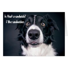 Shop Surprised Dog Funny Adopted Humor Border Collie created by ColorFlowCreations. Border Collie Puppies, Collie Dog, Border Collies, Border Collie Humor, I Love Dogs, Cute Dogs, Awesome Dogs, Border Collie Colors, Surprised Dog