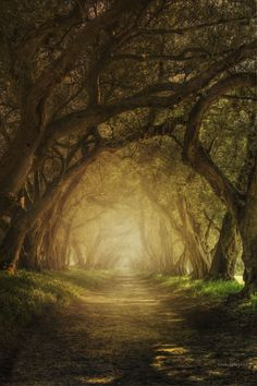 ~~Camino | a forest path | by ana iglesias~~