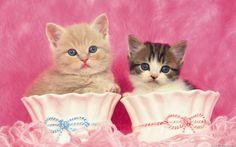 cat + pink - Pesquisa Google