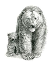 Polar bear and cub SK041 Art Print