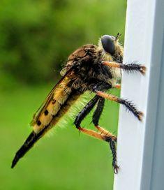 Beautiful Bugs, Animals, Animais, Animales, Animaux, Animal, Dieren