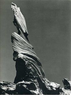 Edward Weston Driftwood Stump (Crescent Beach) 1937