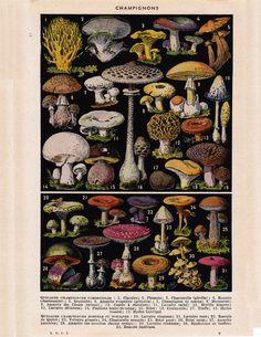 Items similar to Mushrooms Vintage French Dictionary Illustration- on Etsy Mushroom Art, Mushroom Fungi, Mushroom Guide, Botanical Illustration, Illustration Art, Bolet, Scientific Drawing, Flora Und Fauna, Ernst Haeckel