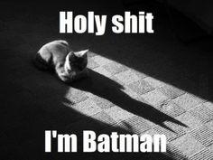 https://fbcdn-sphotos-f-a.akamaihd.net/hphotos-ak-ash3/7590_330774643711747_912369583_n.png  ... and the tail of batman begins ...