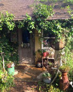 いいね!2,285件、コメント62件 ― @ricocotanのInstagramアカウント: 「2016 5・15 小屋の前にお気に入りの七福神を置きました。 見えにくいかなぁ。。。(笑) #ナチュラルガーデン #マイガーデン #庭の小屋 #プミラが這う小屋 #多肉植物 #七福神」