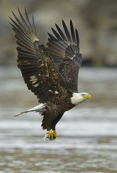 Keep a sharp eye out on your way out of town...  we frequently spot bald eagles from the 18-mile stretch!