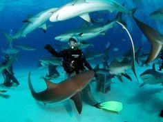 Scuba dive with sharks, without a cage. My type of extreme sport.