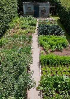 vegetable garden  | potager ! Home ideas