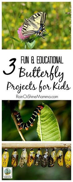 Three Fun and Educational Butterfly Projects for Kids. From butterfly gardens to citizen science, these fun butterfly activities are bound to be a hit with the kiddos! Nature Activities, Kids Learning Activities, Science Activities, Educational Activities, Kinesthetic Learning, Animal Activities, Language Activities, Preschool Science, Science Experiments Kids