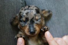 Just look at those cute little feetsies!!