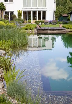 Biological filtering> Zinsser landscaping, swimming ponds and swimming pools - All For Garden Swimming Pool Decks, Natural Swimming Pools, Swimming Ponds, Big Garden, Water Garden, Patio Gazebo, Pool Backyard, Gardening Websites, Pond Landscaping